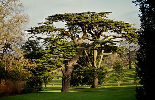 cedars at kingston lacy