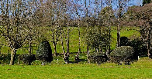 odd hedge