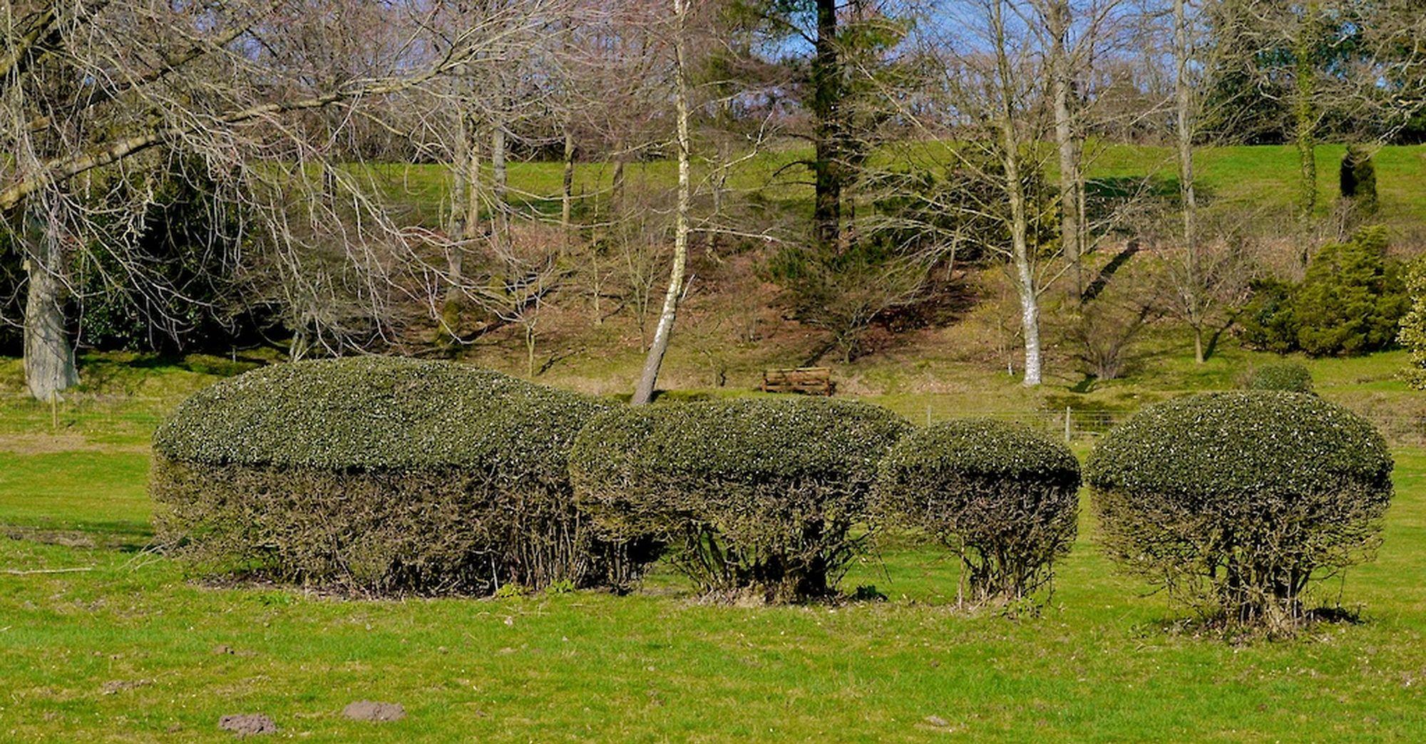 odd hedge2