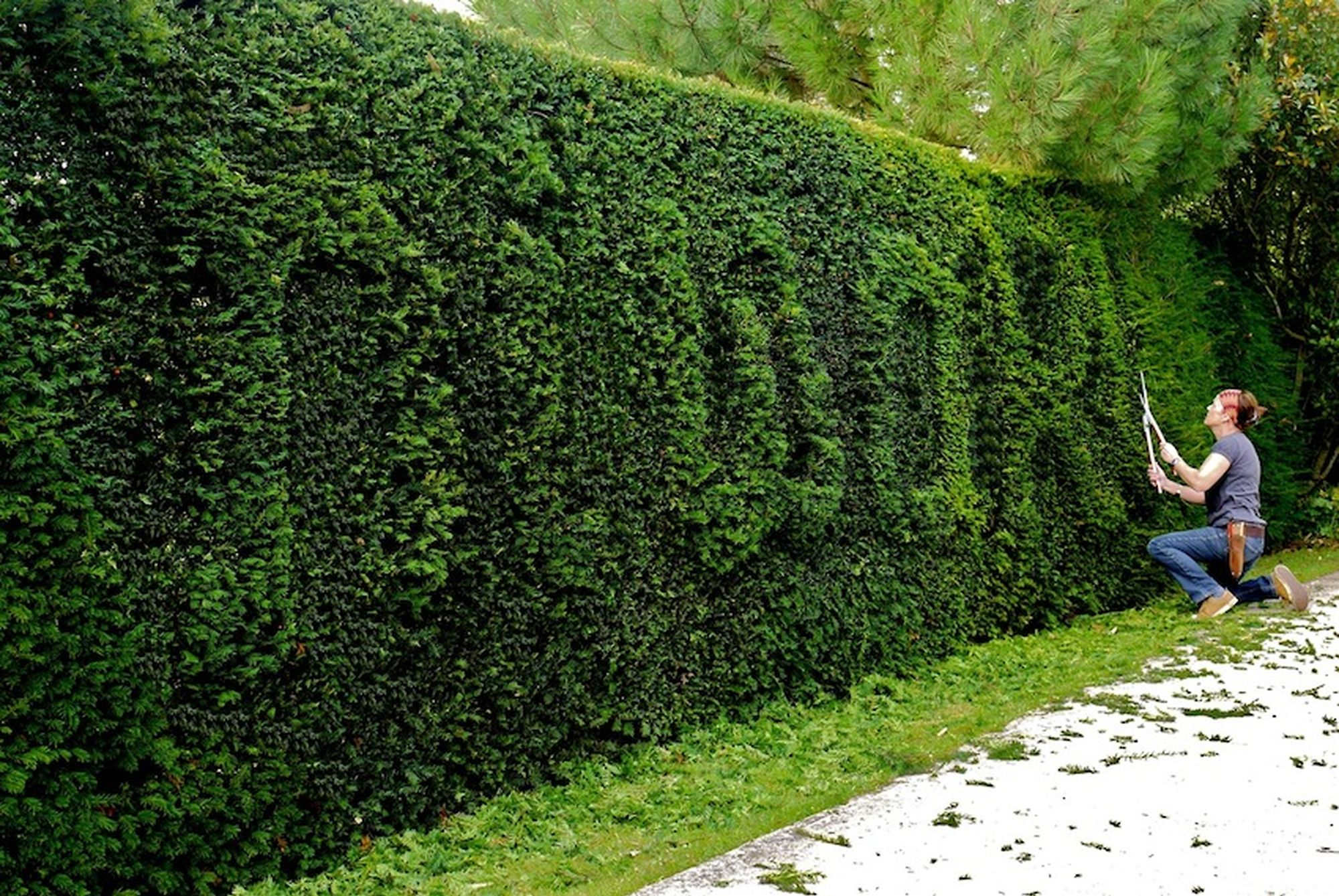 Niwaki Niwaki Hedge