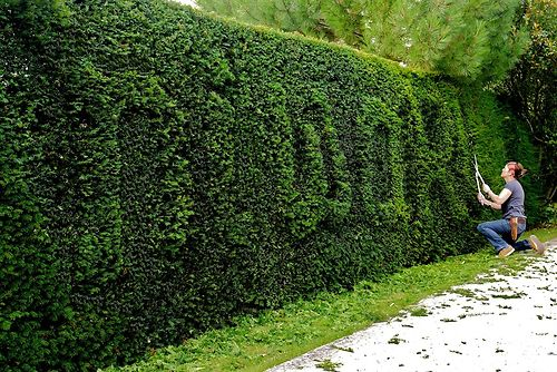 niwaki hedge