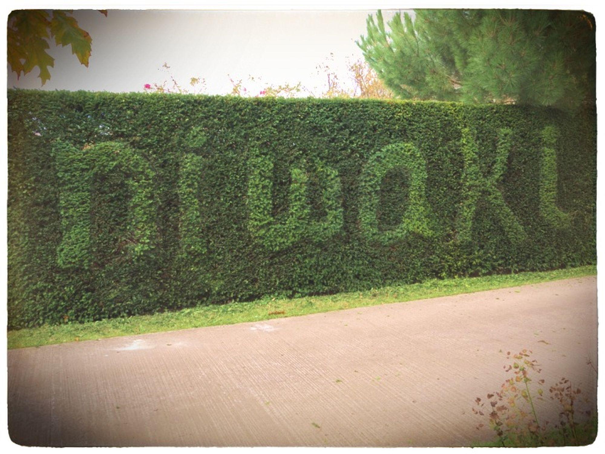 niwaki hedge 1