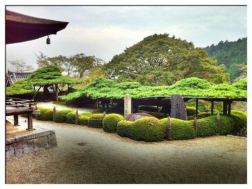 yoshimine pine