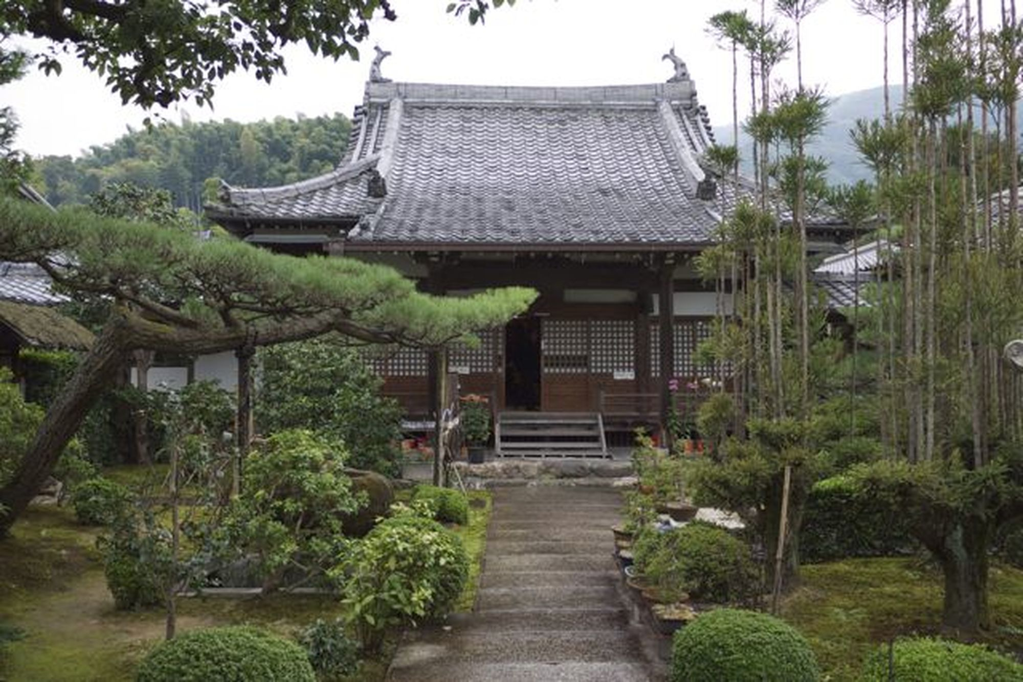 shobo-ji pine and sugi
