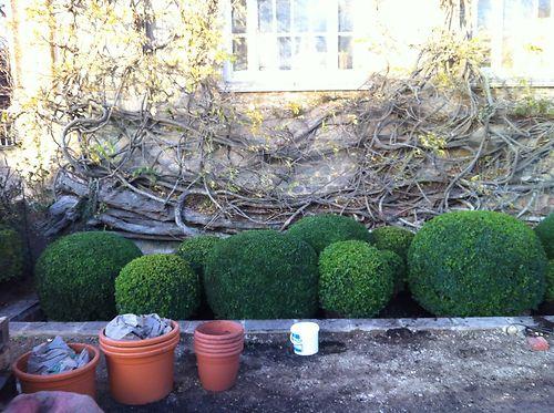 Organic Topiary