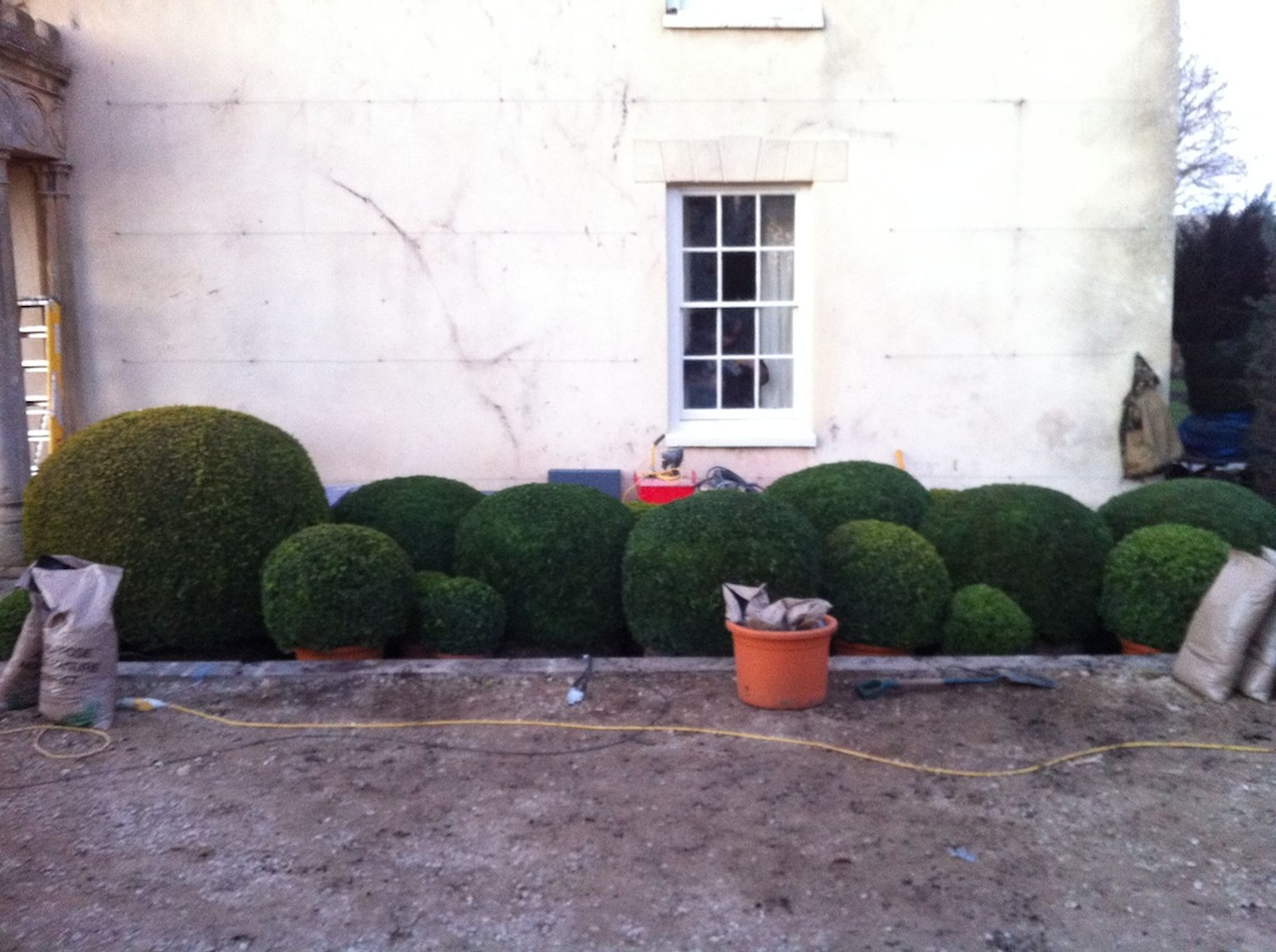 Organic Topiary 2