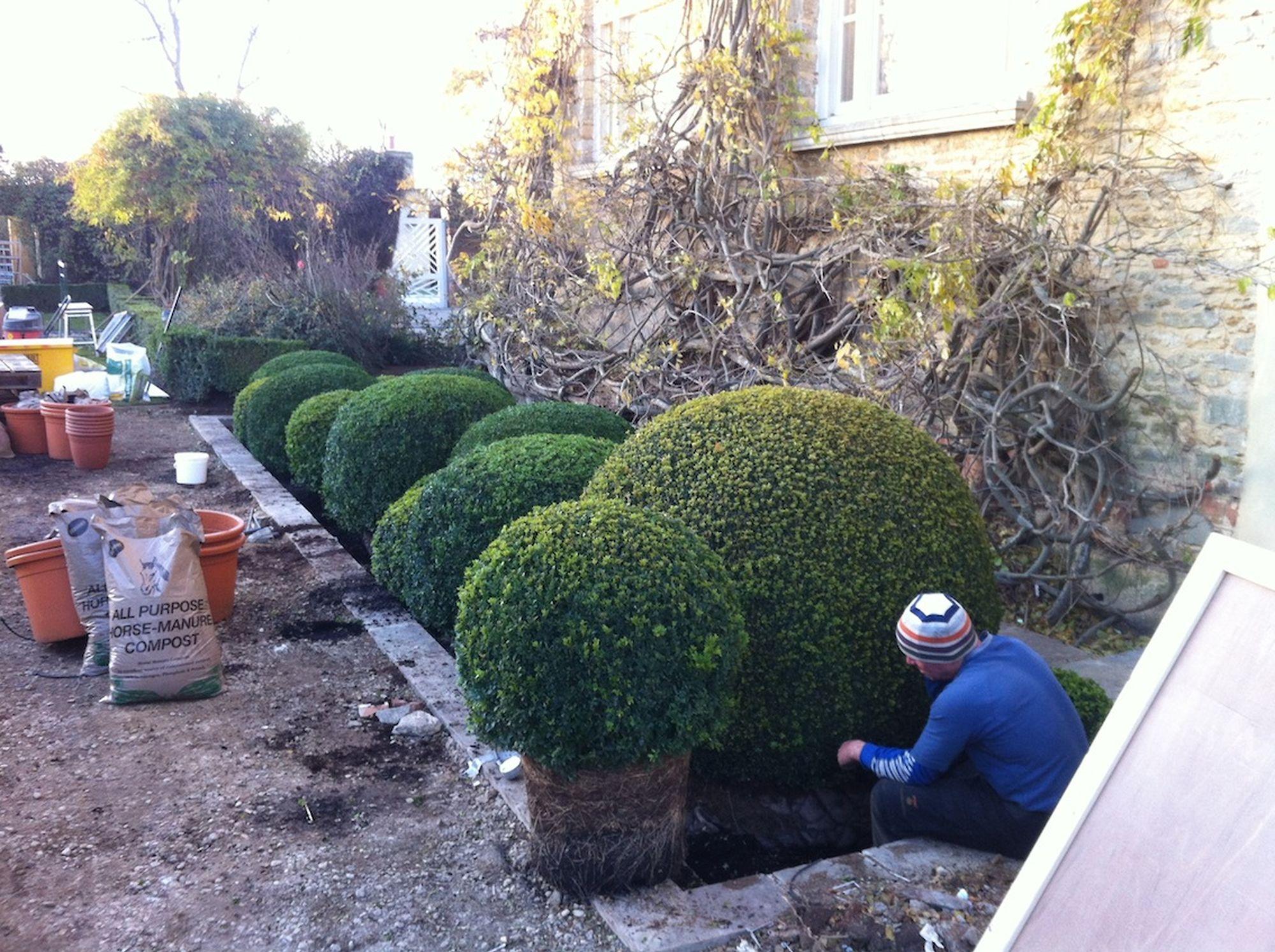 Organic Topiary 3