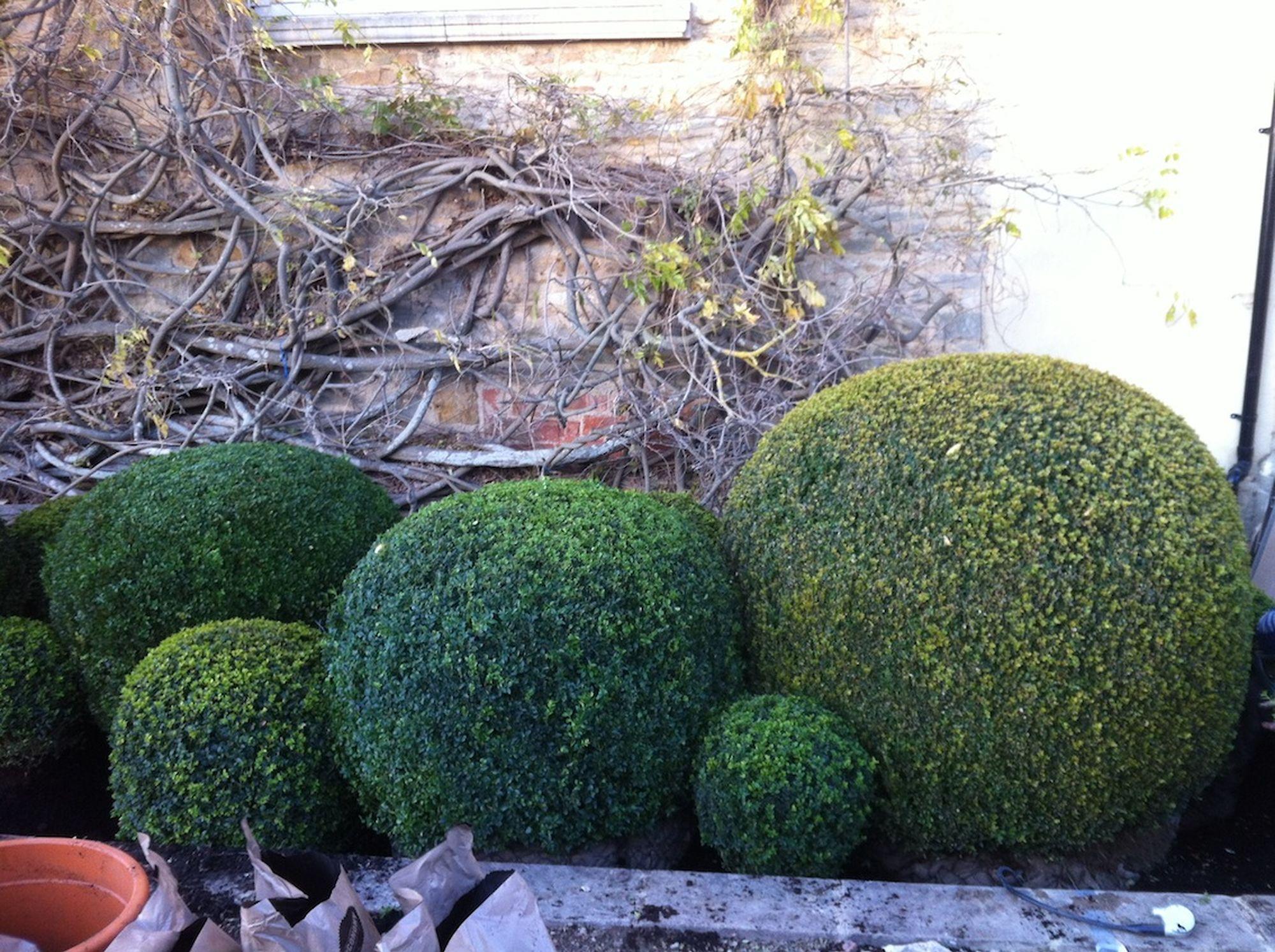 Organic Topiary 4