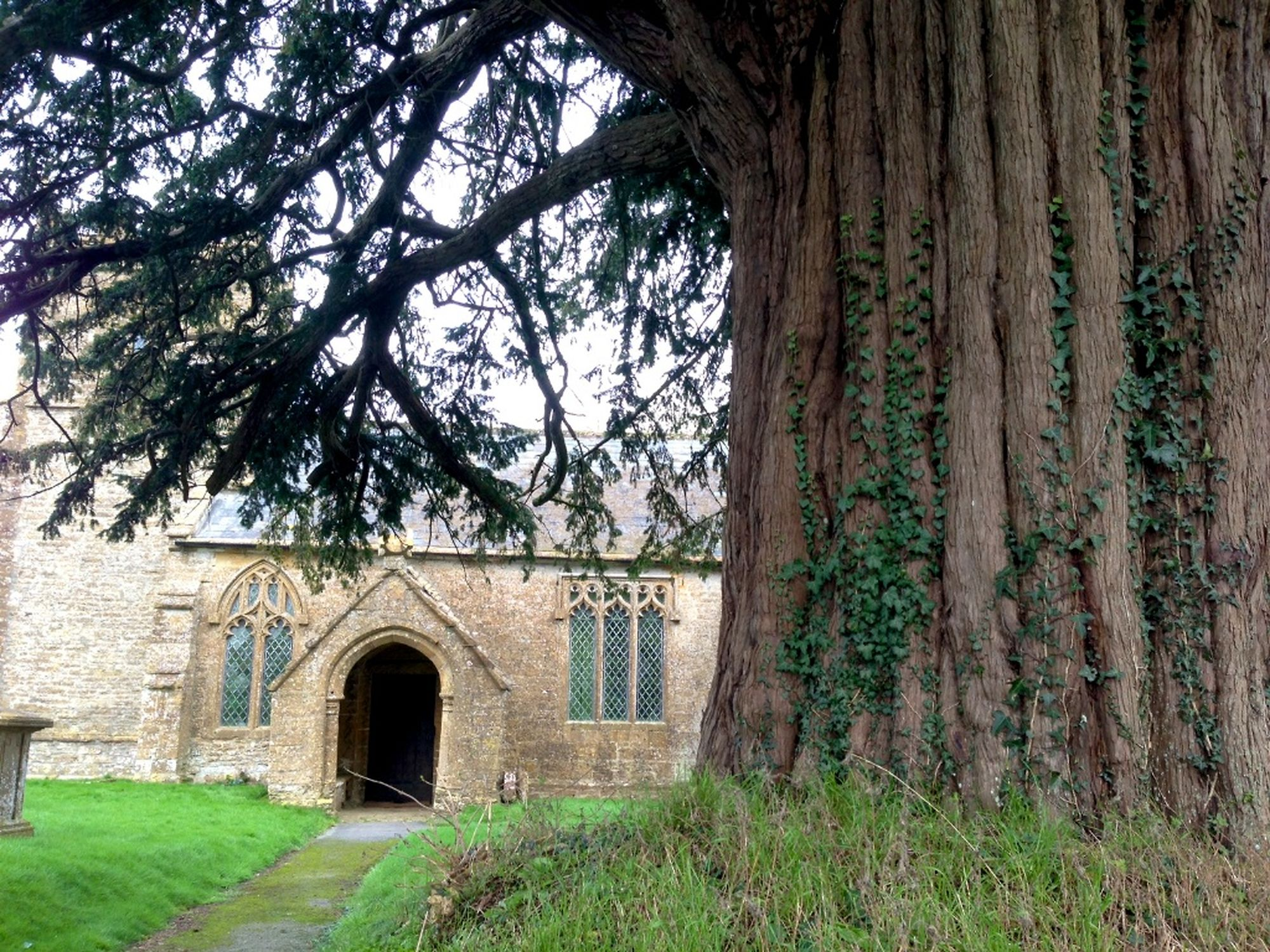 middle chinnock yew