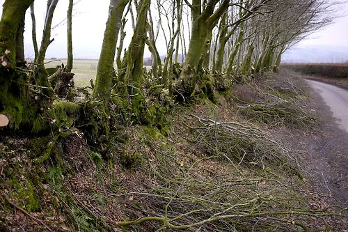 Exmoor Hedge 2