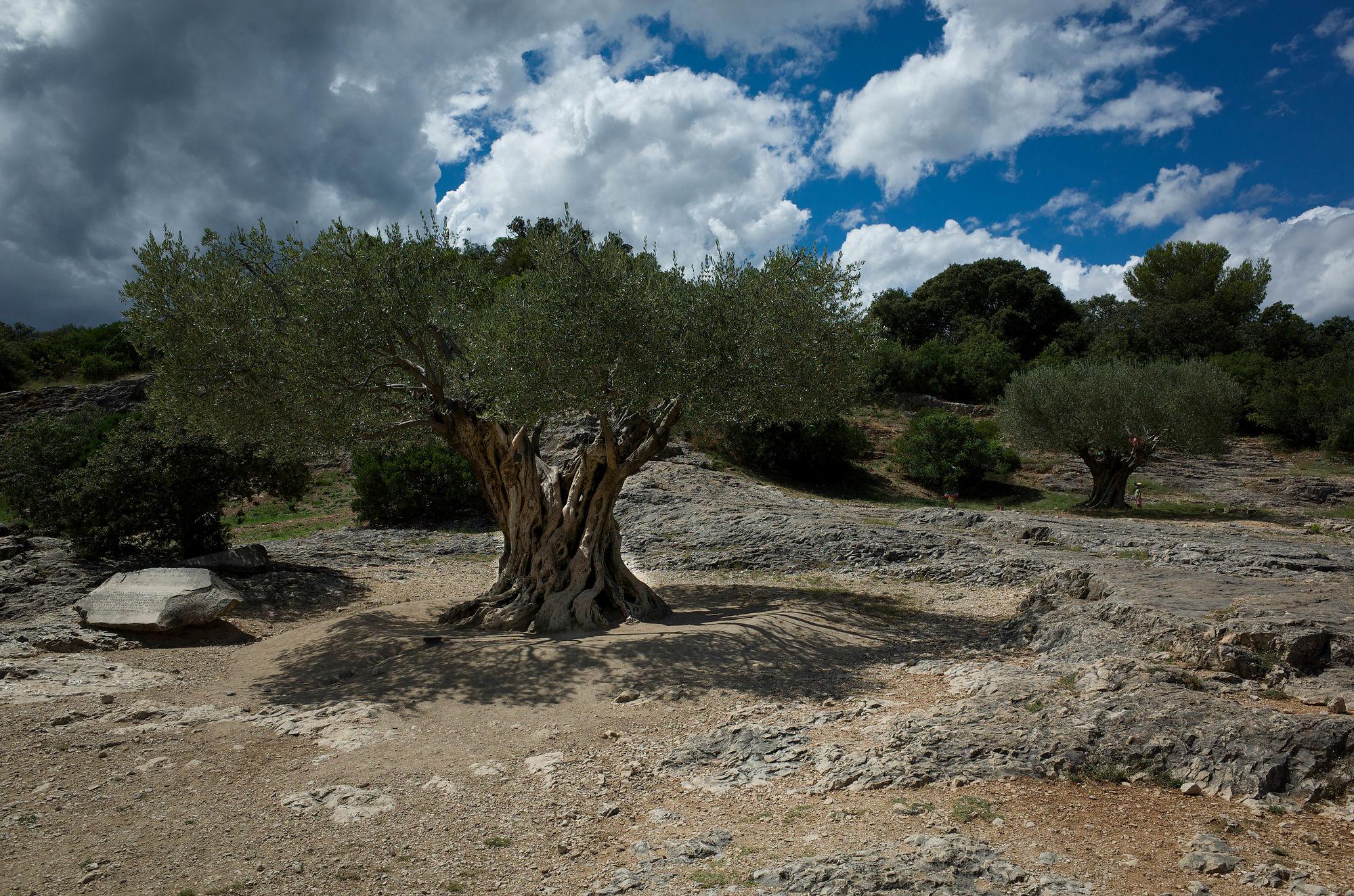 pont du gard olives