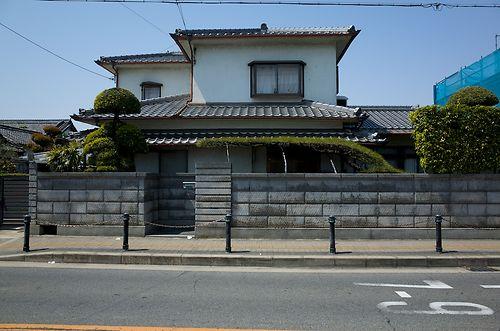 Chiyoda's Silliest Pine 1