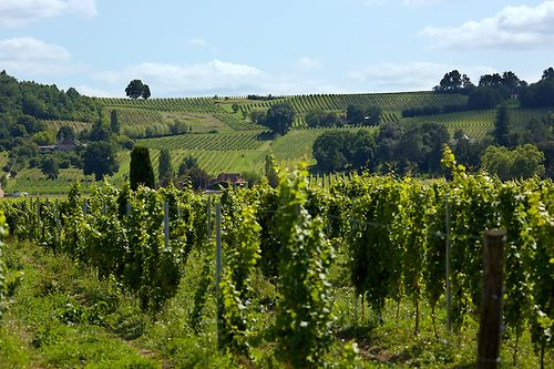 Les Vignobles de Bergerac