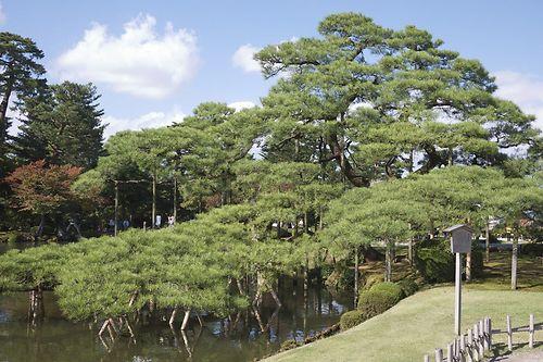 Tree Trip to Japan