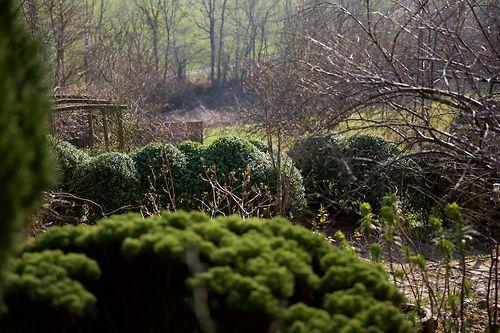 cloudy box hedge
