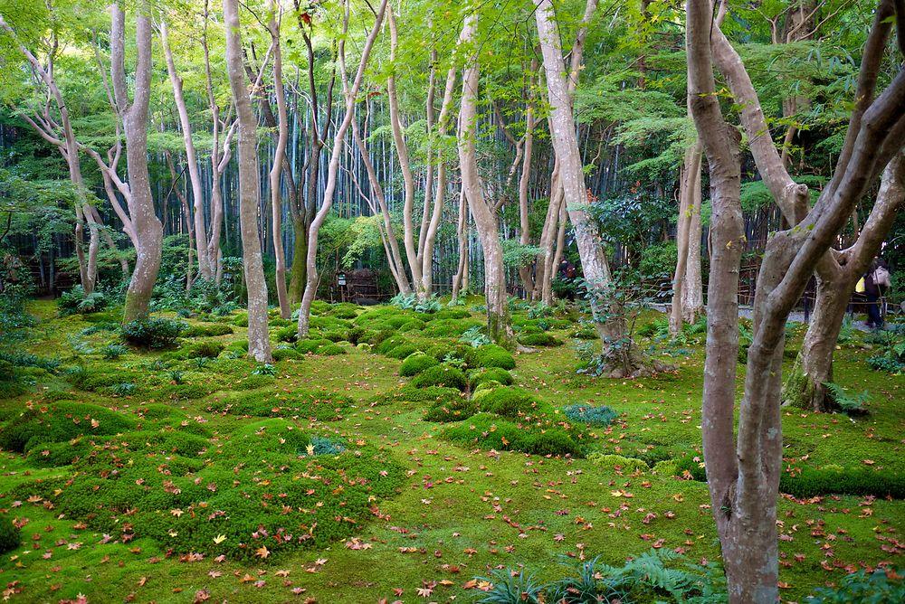 Gio-ji, Kyoto