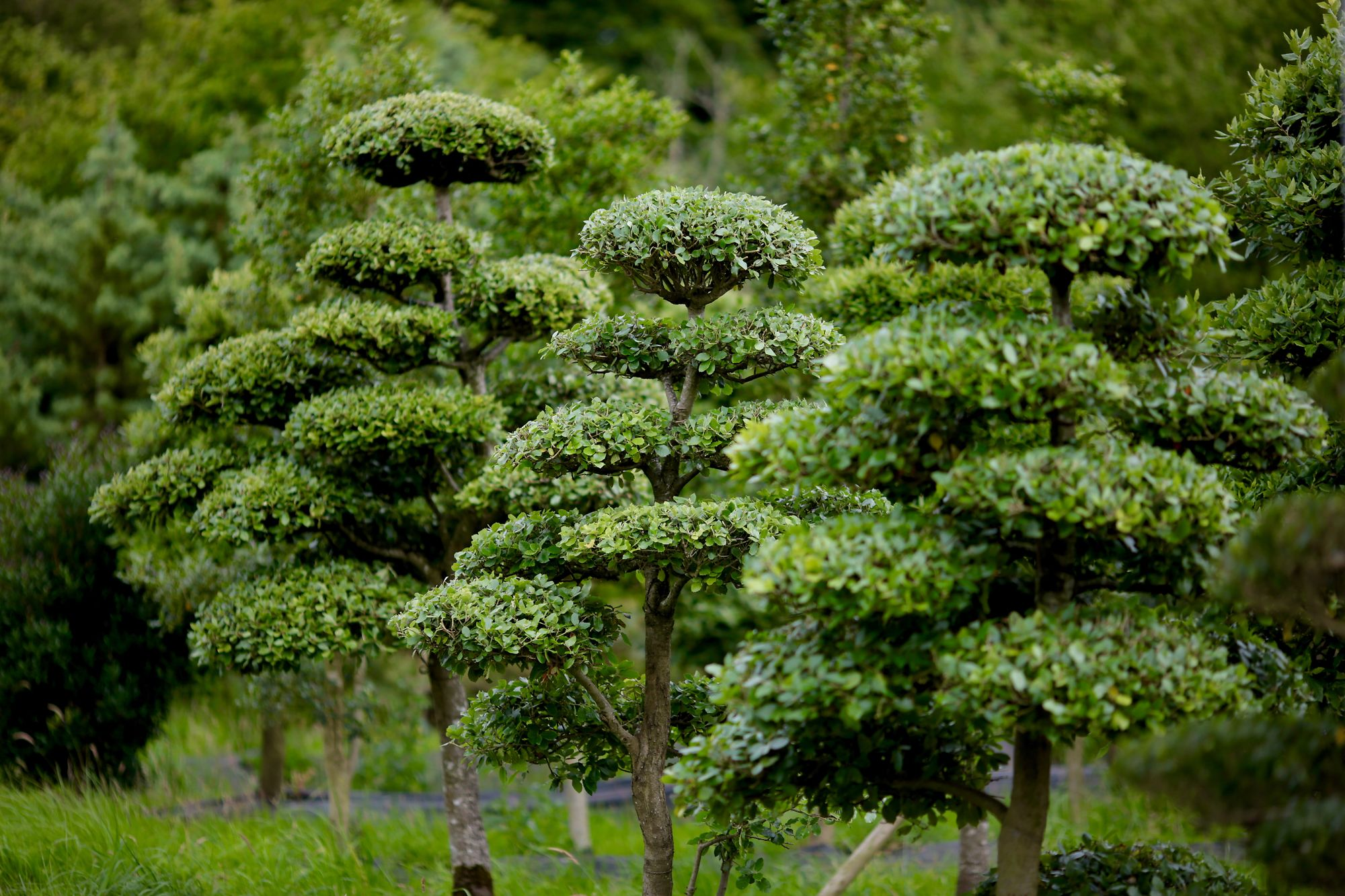 Ladders For Sale >> Niwaki - Niwaki Tree Nursery Open Day