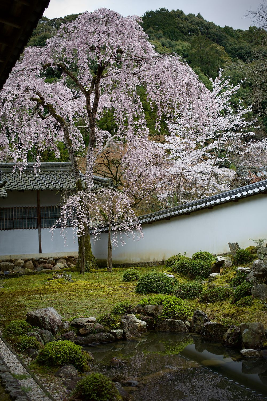 In the garden at Kongo-ji