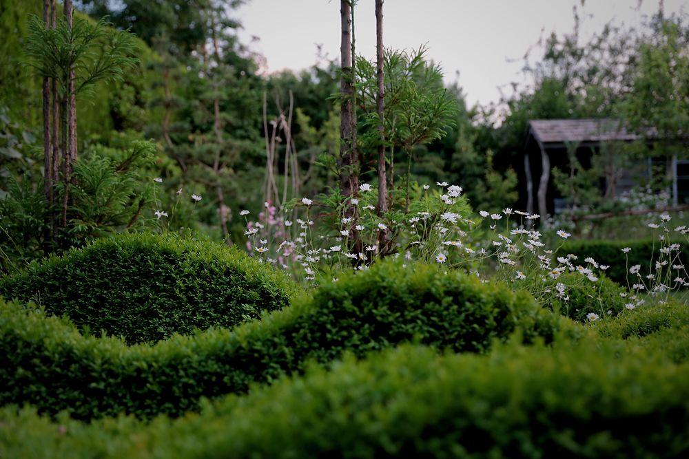 Jake's garden 3