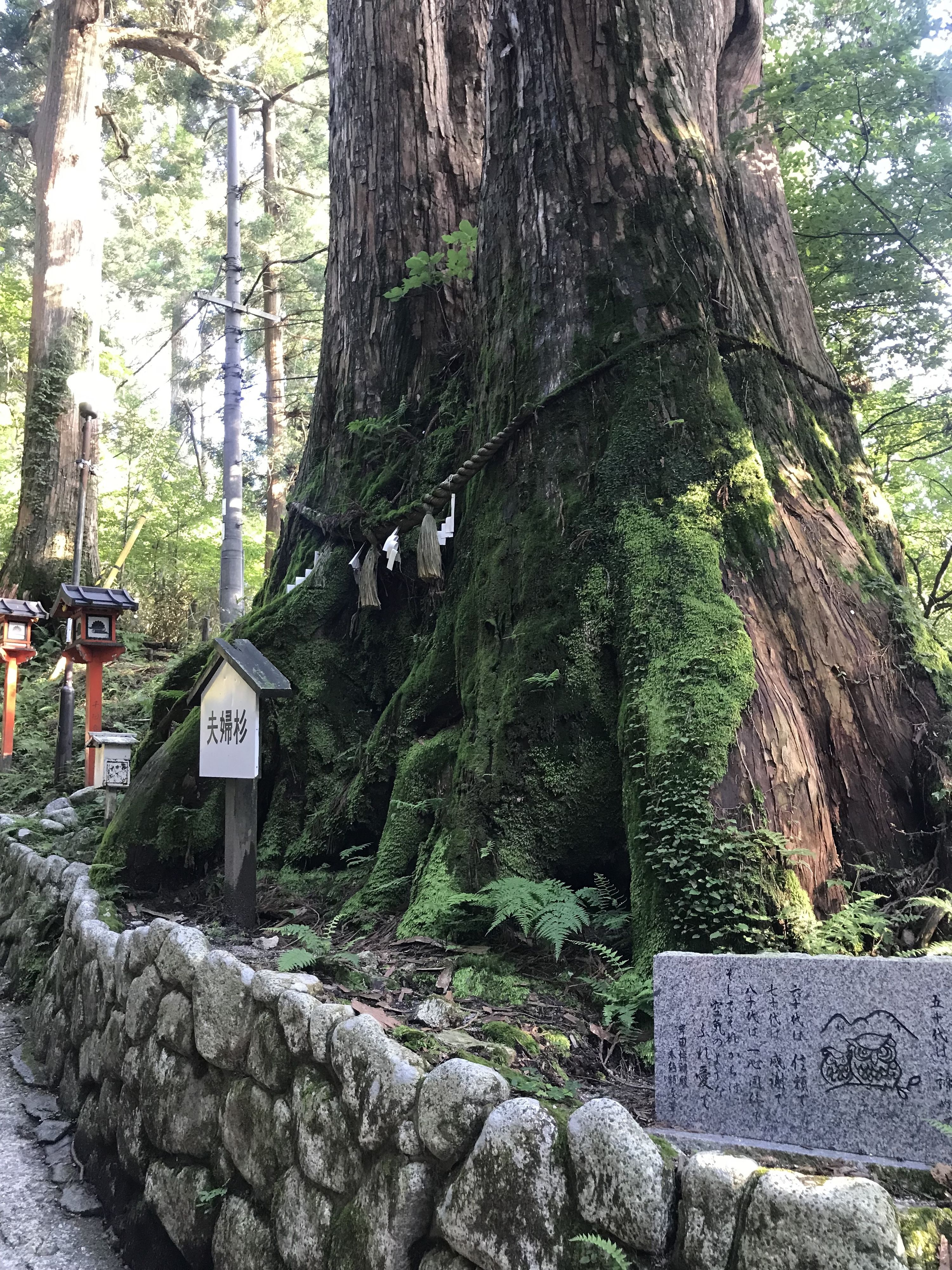 Large Cryptomeria shrine