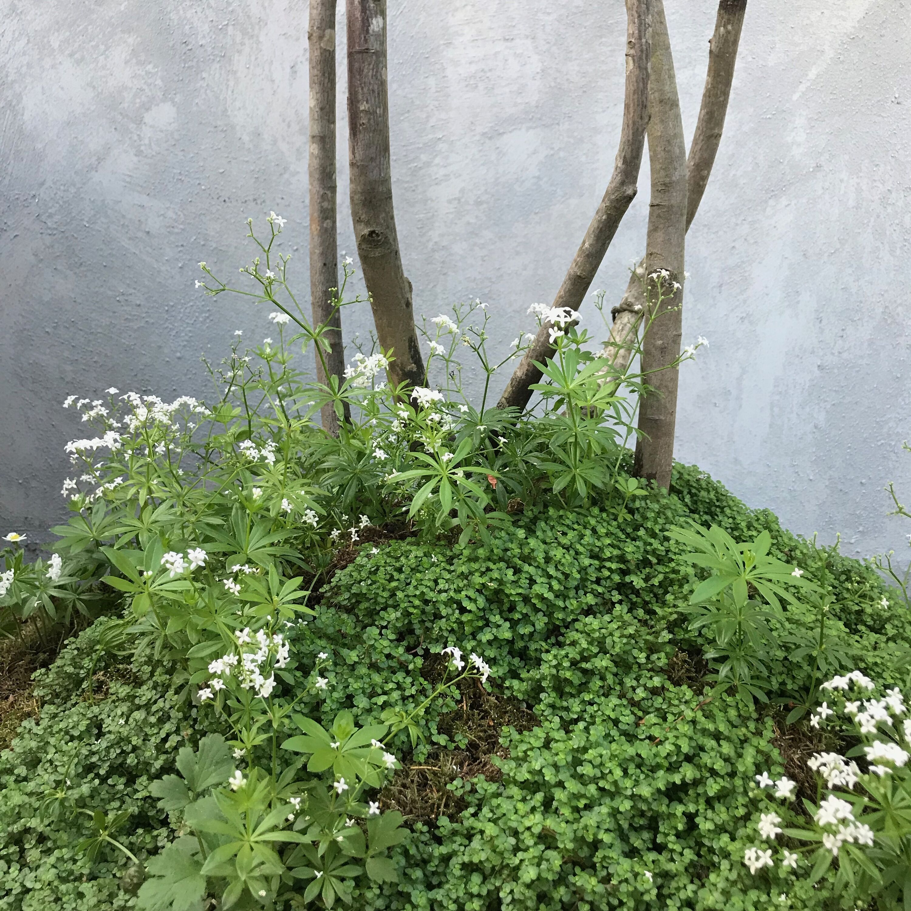 Mind your own business, and sweet woodruff