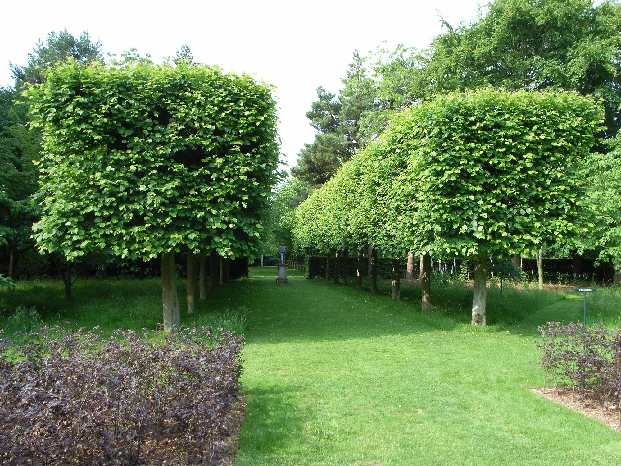 cottesbrooke pleached limes
