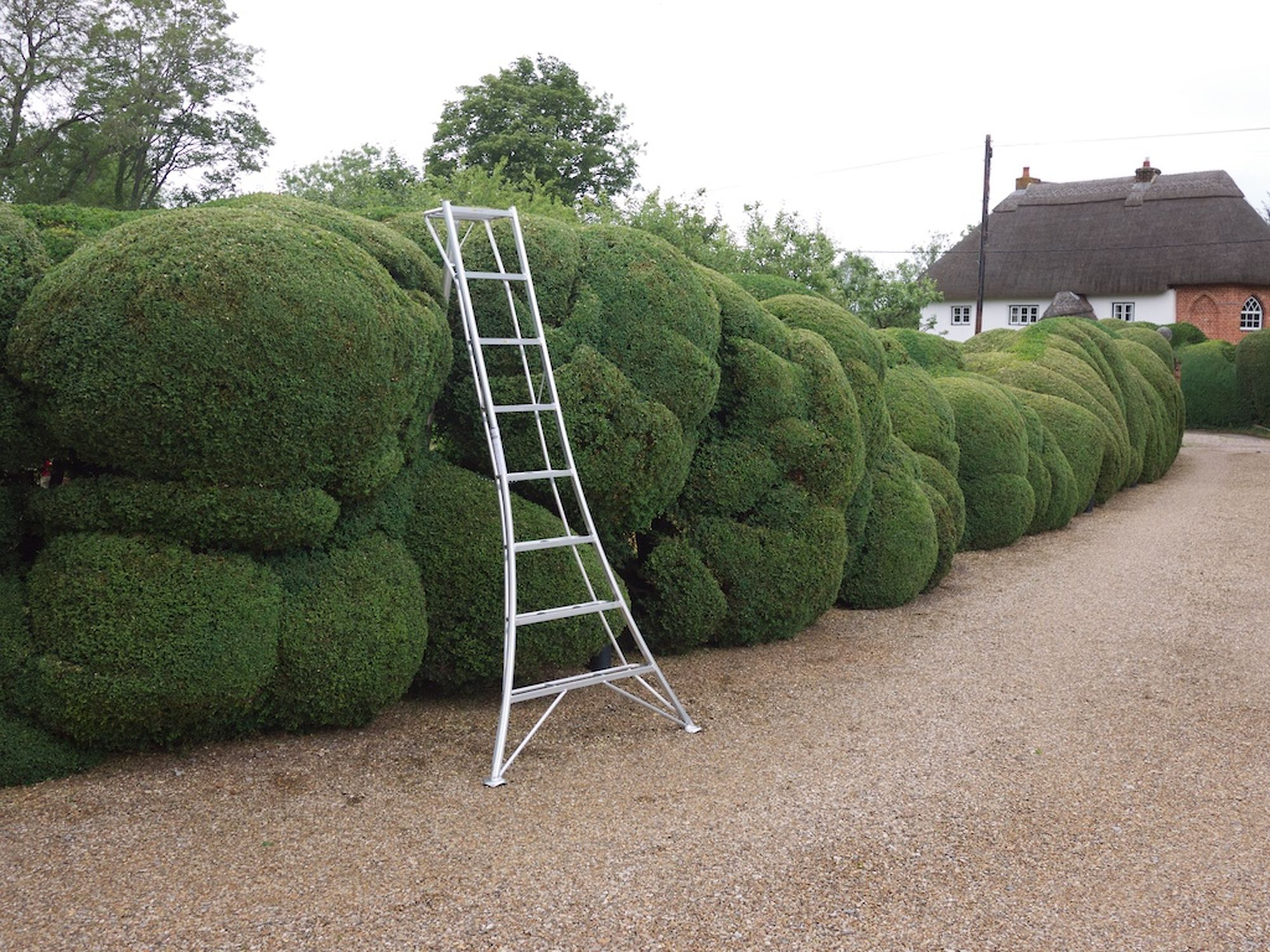 cloud pruned box hedge