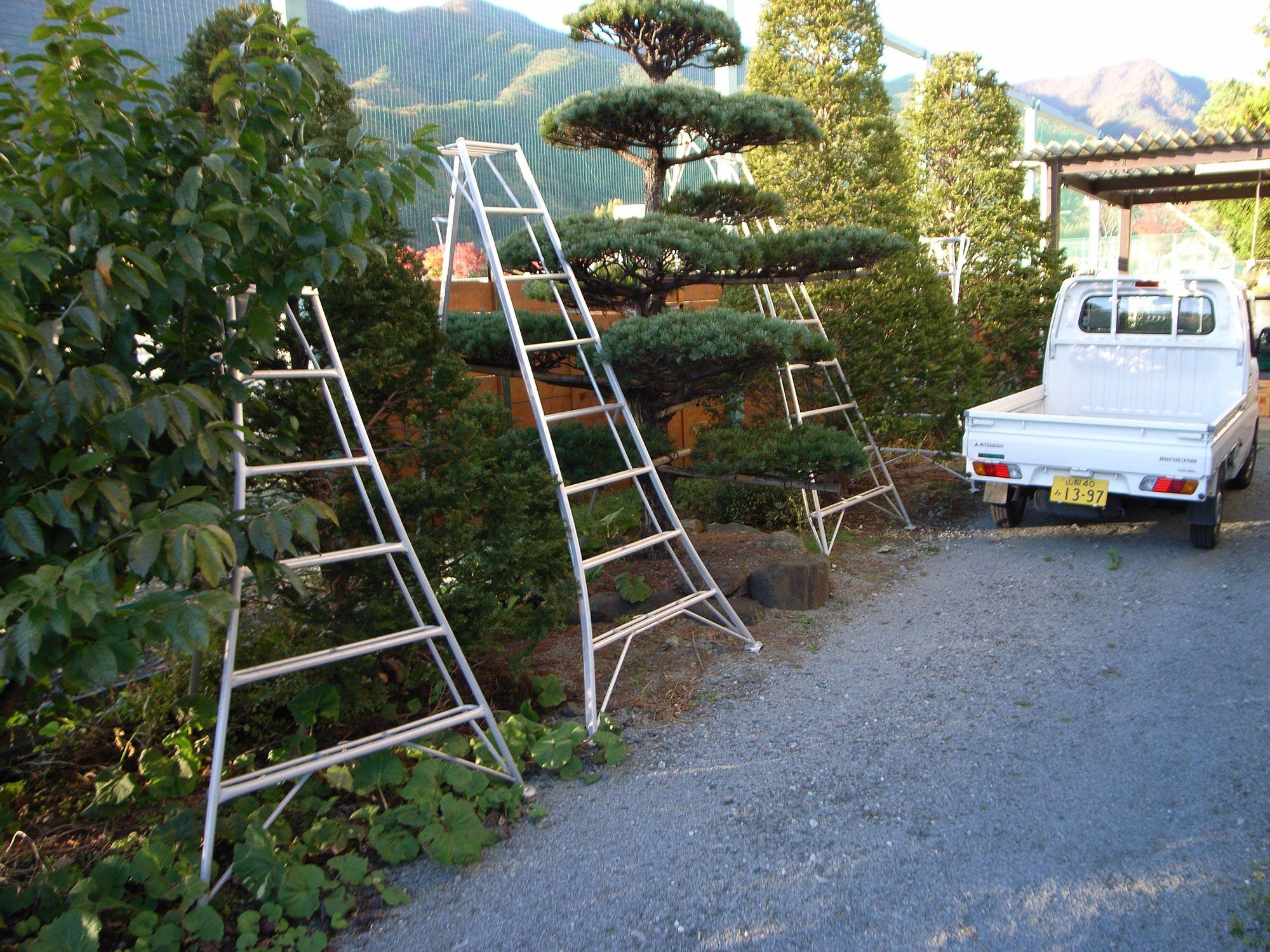 fuji- black pine, tripod ladders