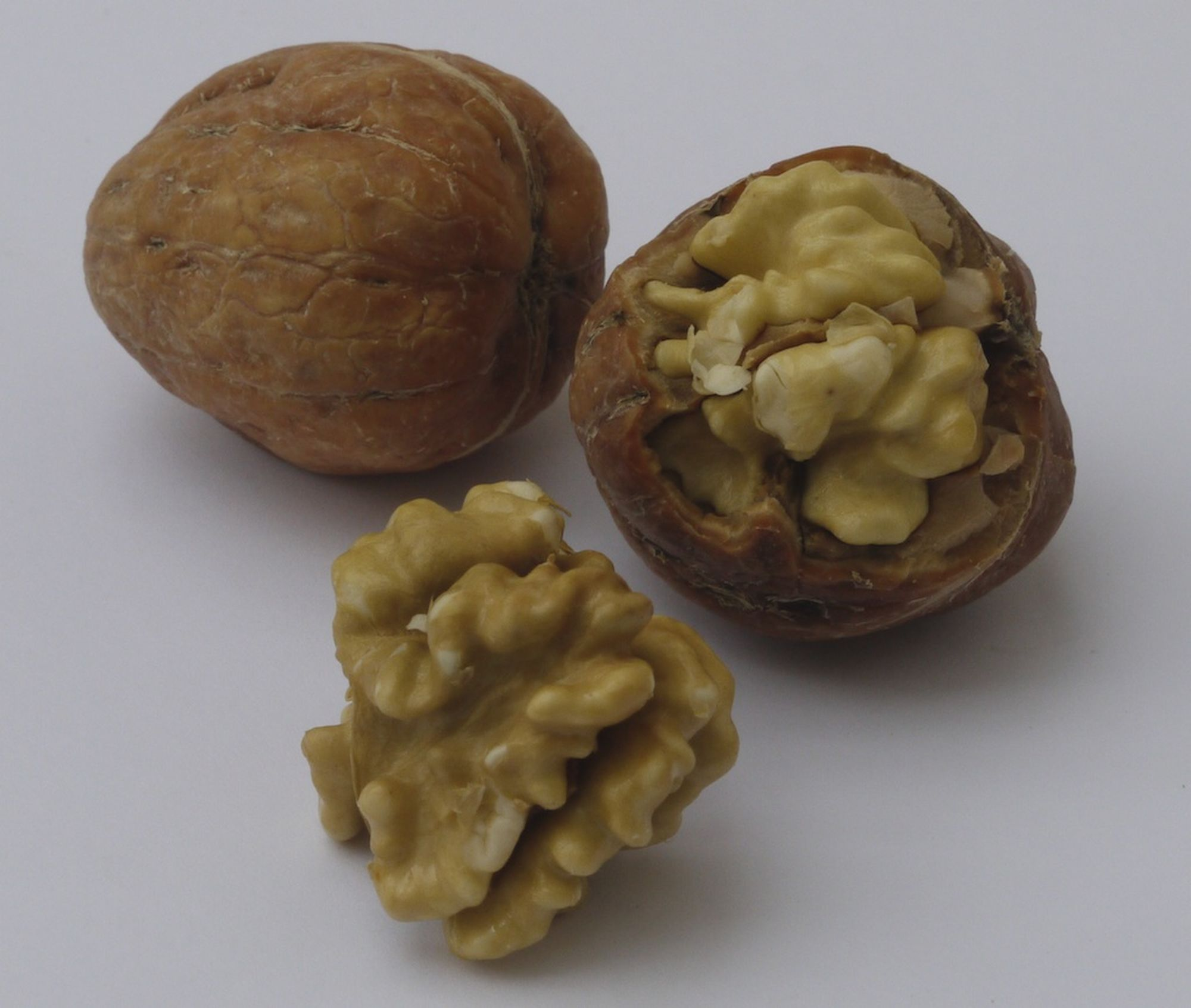 niwaki walnut