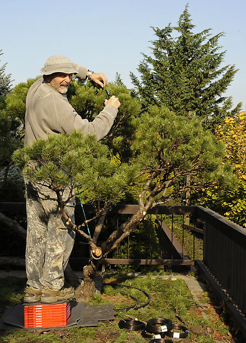 Gabor pruning niwaki