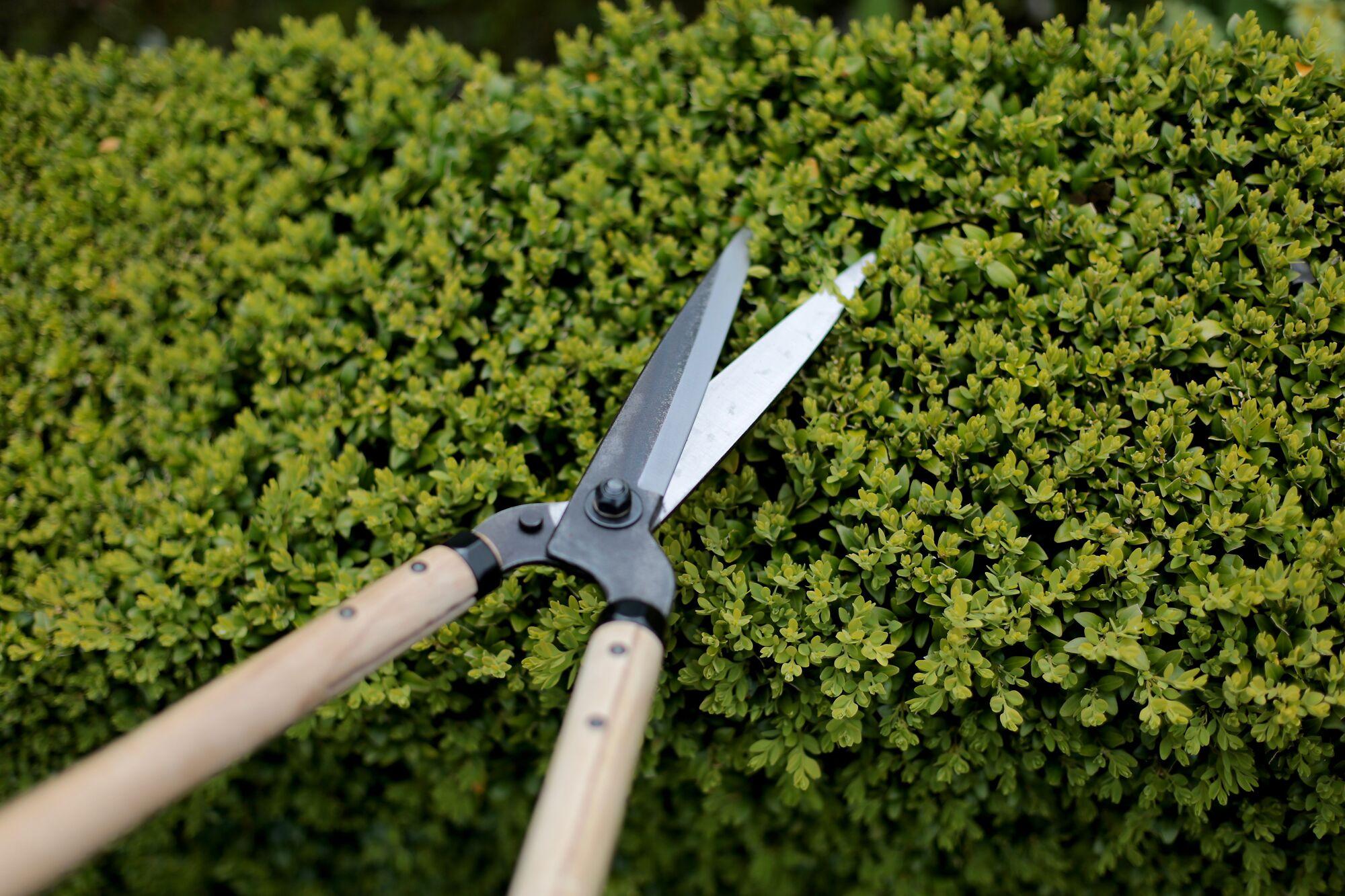 Niwaki Garden Shears With Heavy Duty Leather Sheath
