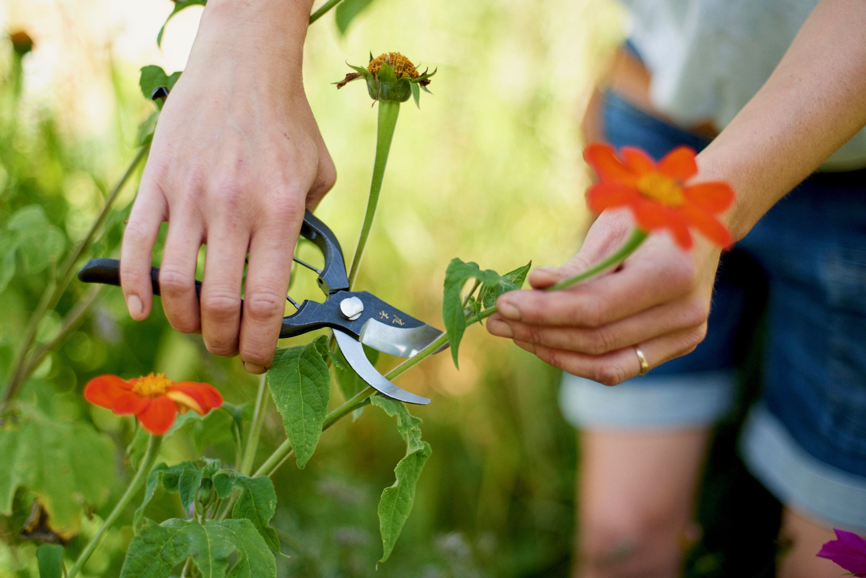 Pruning Tools: Secateurs, Topiary Clippers & Shears