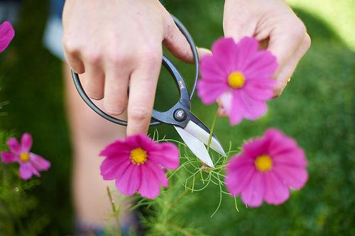 Sentei Garden Scissors